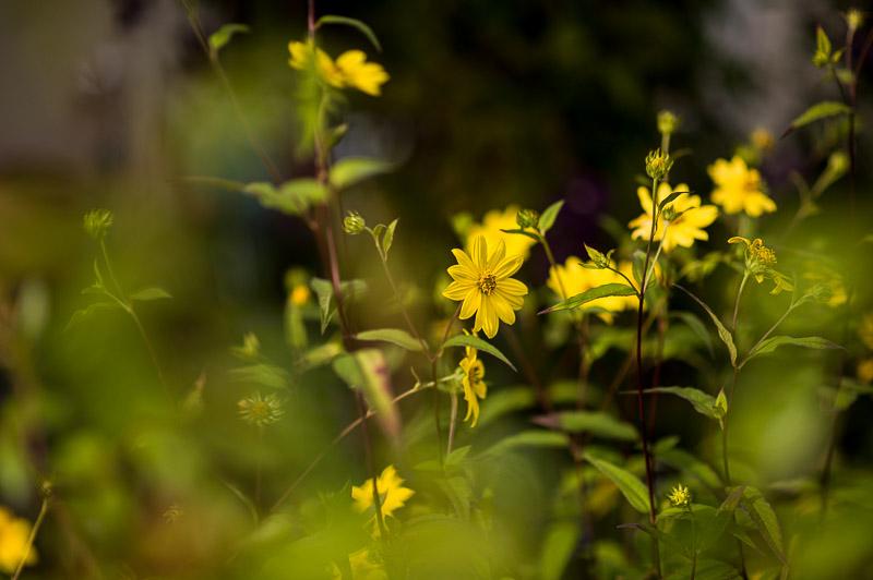 Vorteile der Homöopathie